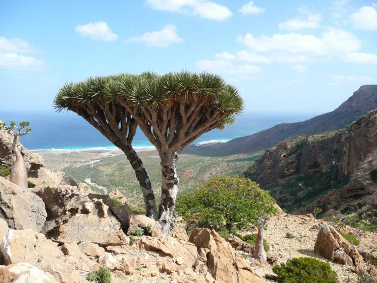 Jemen 2008 Socotra